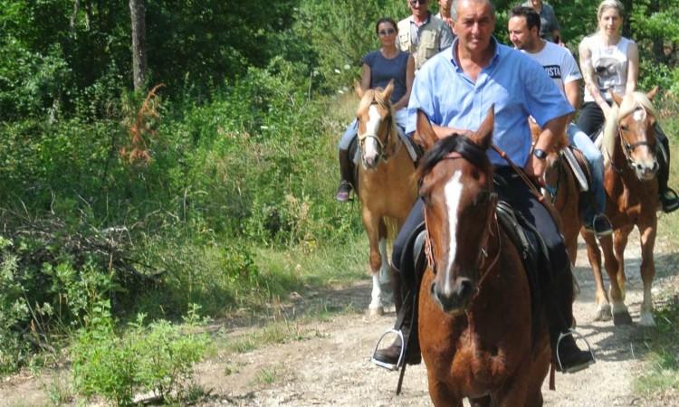 Cavallo Parco Monti Sibillini